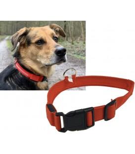 Hunde-Halsband leuchtend mit LED Bild 1